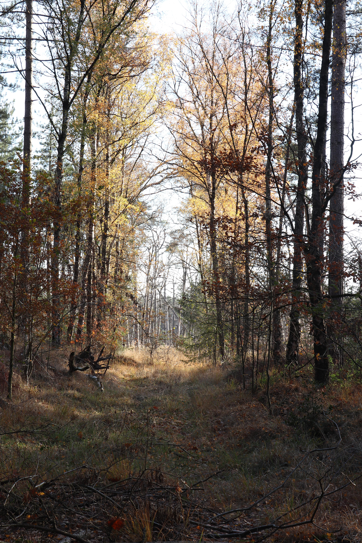 Mastbos in de herfst.