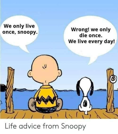 Advies van Snoopy